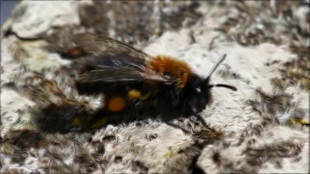 Watch and share Bees GIFs and Bee GIFs by Symmetric Vision on Gfycat