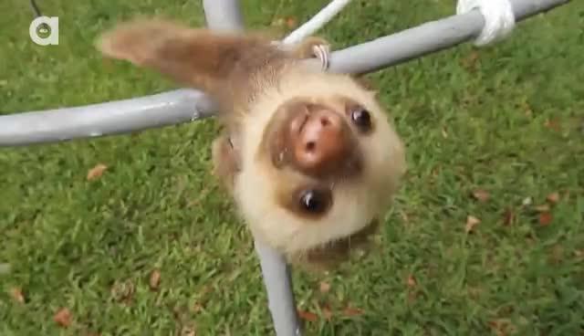 animal, animals, sloth, sloth GIFs