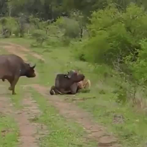 Watch and share Visitafrica GIFs and Southafrica GIFs by Master1718 on Gfycat