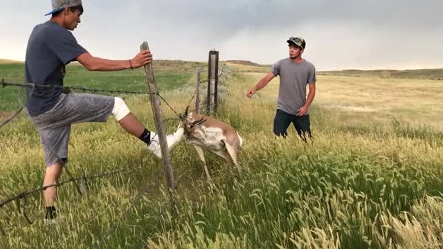 Watch and share Antelope GIFs and Viralhog GIFs by Slim Jones on Gfycat
