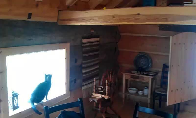 catgifs, Cat jump GIFs