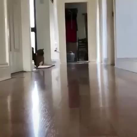 Watch bouncy tippy taps GIF on Gfycat. Discover more related GIFs on Gfycat