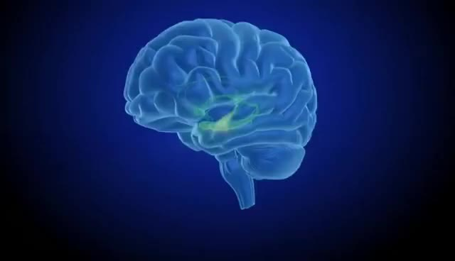 Watch and share Brain Reward: Understanding How The Brain Responds To Natural Rewards And Drugs Of Abuse GIFs on Gfycat