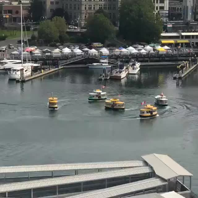 Watch and share Harbour Ferry GIFs and Victoria GIFs by yaak0v on Gfycat