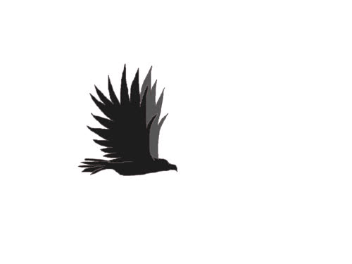 Eagle Flying Simple Animation By Fo Real 100