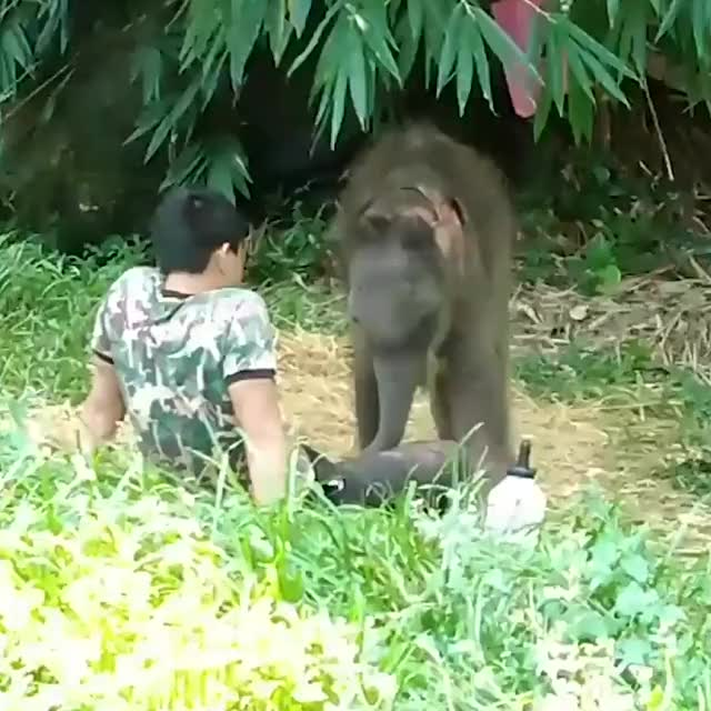 Watch and share Elephant GIFs by GIFs For Everything on Gfycat