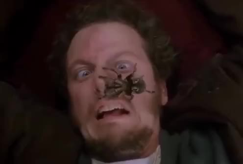 afraid, alone, face, god, help, home, my, no, oh, omg, please, scared, scene, scream, spider, stop, Home Alone Spider Scream scene GIFs