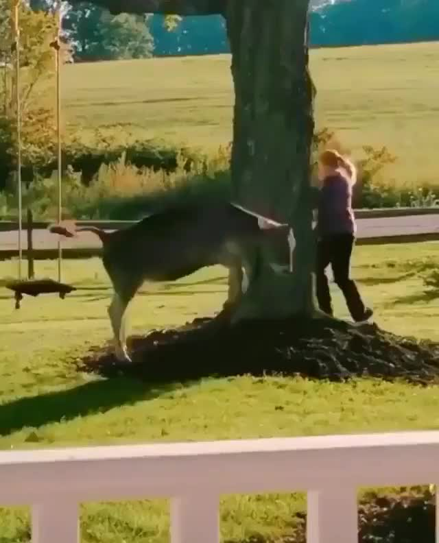 Watch and share Animals Playing GIFs and Chase GIFs by lnfinity on Gfycat