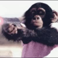 Watch Squirrell Monkey, Chimp, Silver Back, Kong photo: myspace-comments-monkey-chimp-gun-animated.gif myspace-comments-monkey-chimp-gun-a.gif GIF on Gfycat. Discover more related GIFs on Gfycat