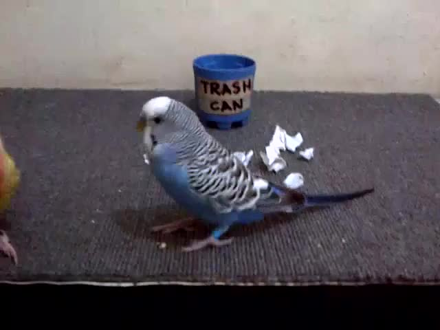Watch Parrots Clean up Trash || ViralHog GIF by microcosmos on Gfycat. Discover more viralhog GIFs on Gfycat