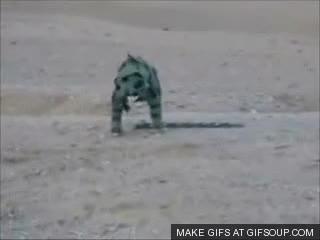 Watch and share Marine GIFs on Gfycat