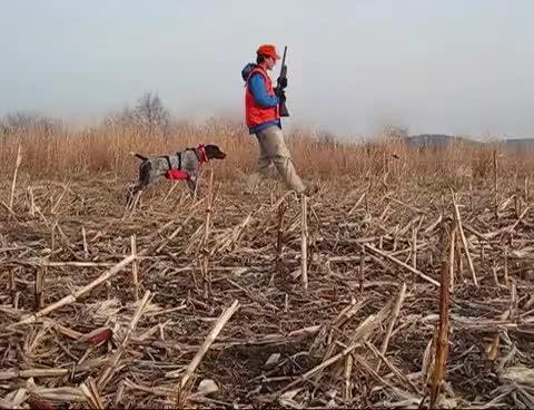 Watch and share Bird Hunting GIFs on Gfycat