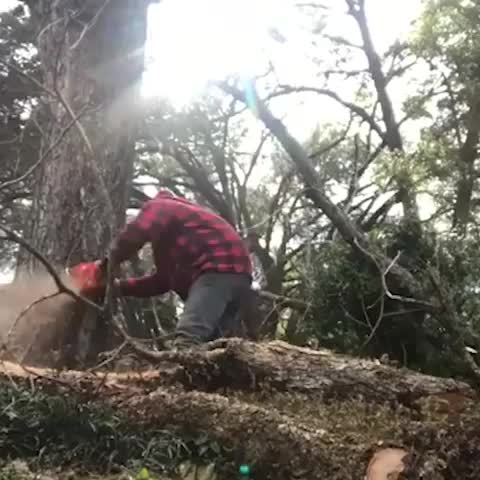 Watch and share Tree Trimming GIFs by Boojibs on Gfycat