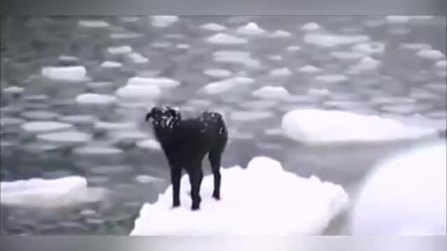 Watch Arctic Dog Rescue GIF on Gfycat. Discover more Humanity, cold, dog, humansbeingbros, ice GIFs on Gfycat