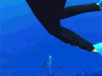 Watch and share Whale GIFs on Gfycat
