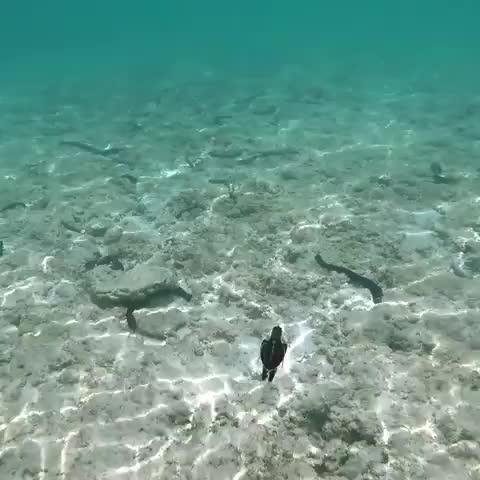 Watch this turtle GIF by vani  (@uncommonvanilla) on Gfycat. Discover more australia, babyturtle, barrierreef, gbr, gopro, goproanz, greatbarrierreef, ladymusgraveisland, ocean, qld, queensland, reef, sea, seeaustralia, southerngreatbarrierreef, turtle, turtles, turtlesofinstagram, visitqueensland, worldturtleday GIFs on Gfycat