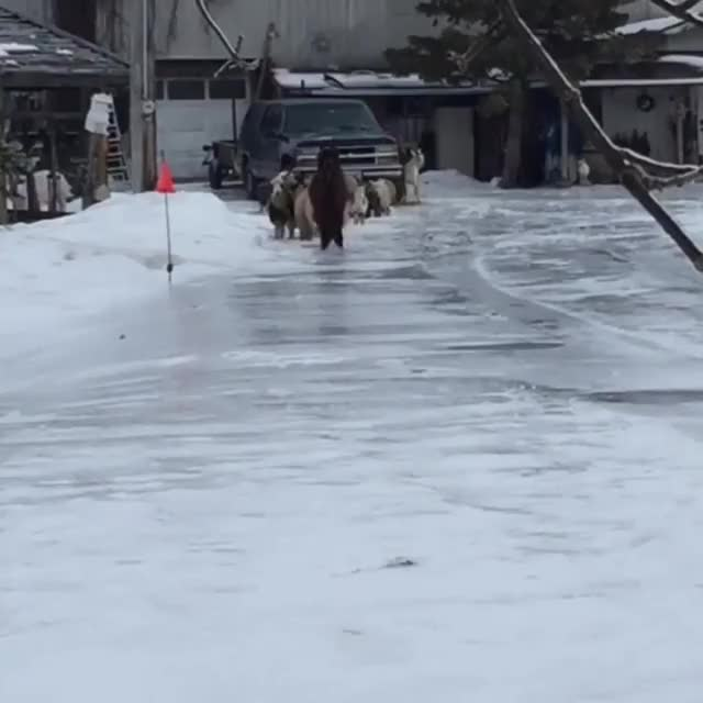 Watch and share Rush Hour During Icy Conditions. GIFs by likkaon on Gfycat