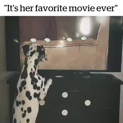 Watch and share Dalmatian GIFs and Dog GIFs by R.S. on Gfycat