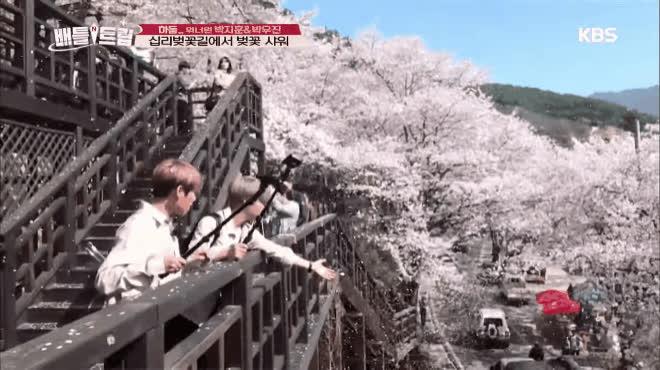 Mỹ nam Wanna One muốn fan sống sao khi rủ nhau đi ngắm hoa anh đào tình bể bình thế này