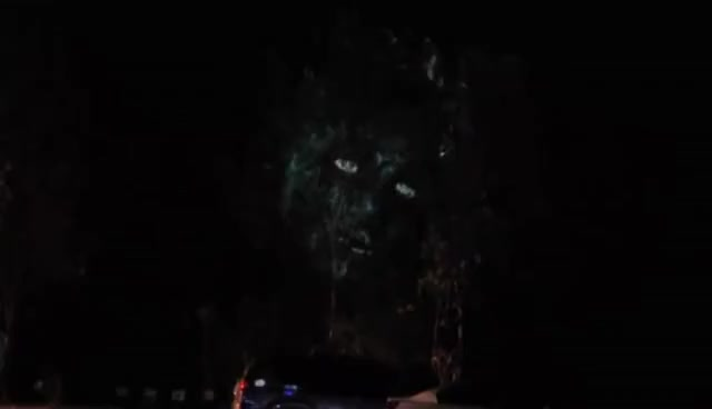 Watch Dryad Tree Projection @ Manifest 2016 GIF on Gfycat. Discover more related GIFs on Gfycat