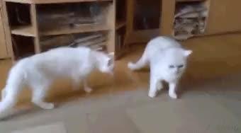 Watch and share Hey! No Fighting (i..com) GIFs on Gfycat