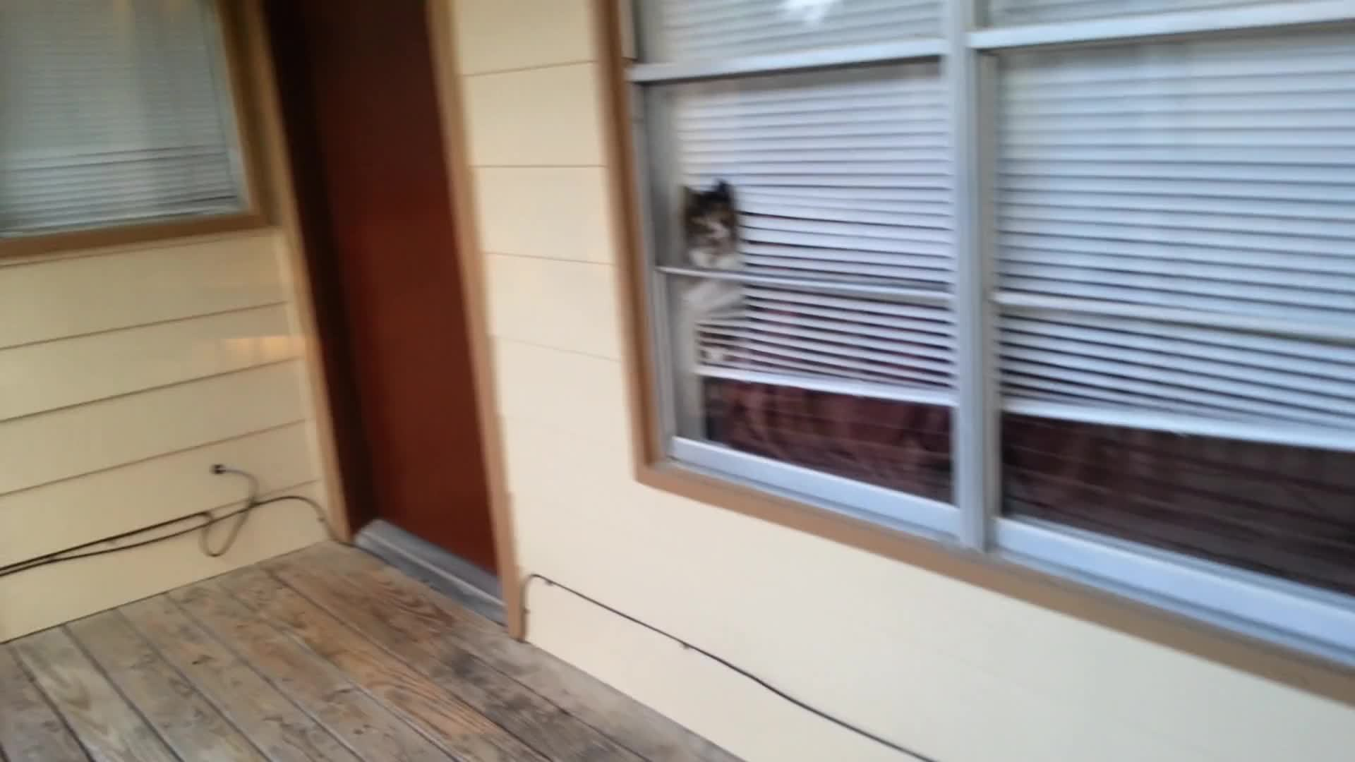 awwgifs, cats, How my cat greets me GIFs