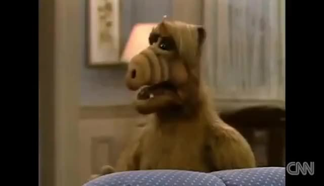 Watch ALF GIF on Gfycat. Discover more Entertainment GIFs on Gfycat