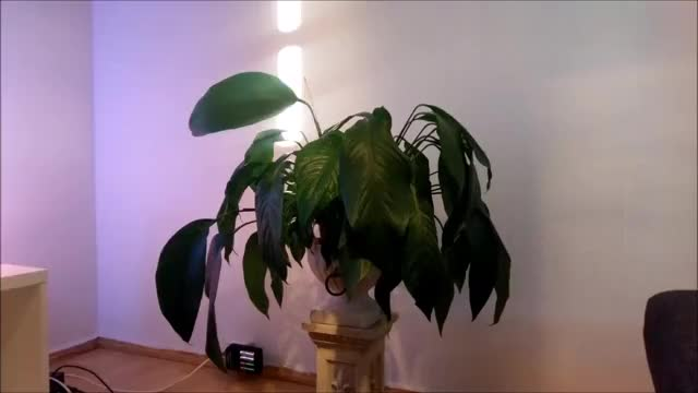 Watch and share Plant GIFs by thomasedv on Gfycat