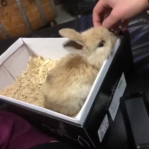 Watch Baby bunny 🙊 #bunny #baby #cute #fluffy #pets #animals GIF by @life.of.shannen on Gfycat. Discover more related GIFs on Gfycat