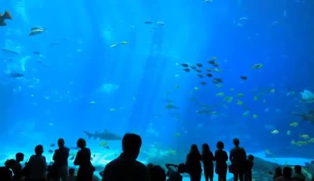 Watch and share The World's Largest Aquarium // Georgia Aquarium // Atlanta GA GIFs on Gfycat
