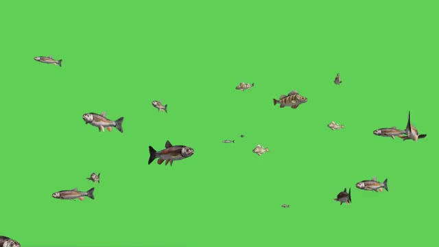 Watch and share Blue Screen Fish GIFs and Hd Stock Footage GIFs on Gfycat