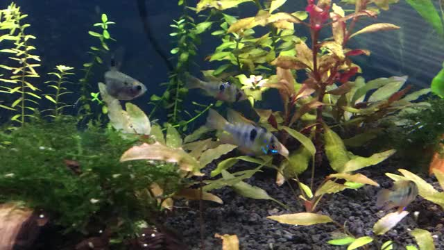 Watch and share Aquarium GIFs and Fish GIFs by rabidelfman on Gfycat