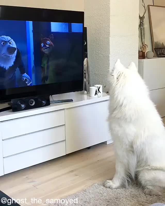 "flashbackfriday, ""Gary, quit it! You're going to start a howl!"" GIFs"