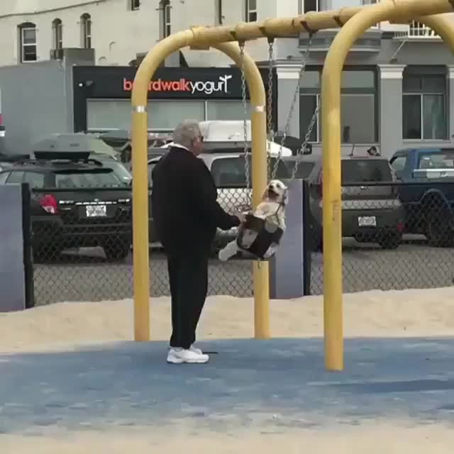 Watch Just an old man pushing his dog on a swing (reddit) GIF by slimjones123 on Gfycat. Discover more related GIFs on Gfycat