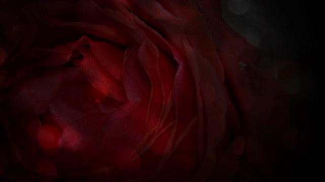 Watch and share Wedding Slideshow GIFs by DeeBrhm on Gfycat