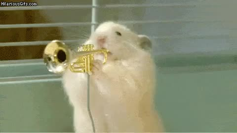 Watch and share Instrument GIFs on Gfycat
