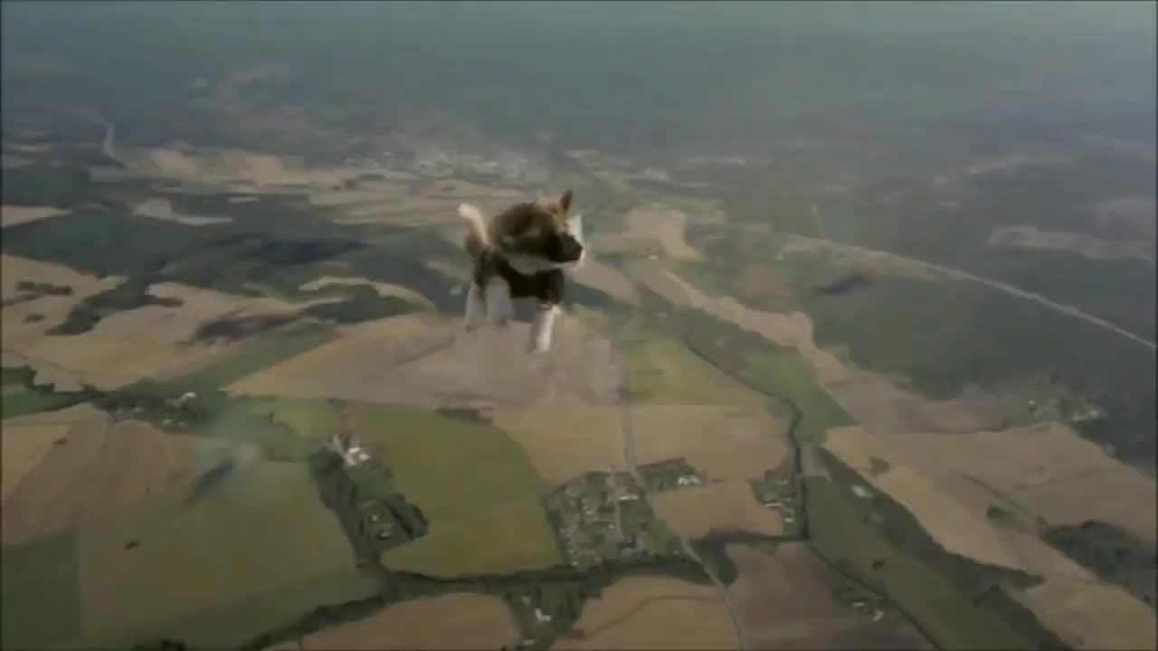 Skydiving Cat GIFs