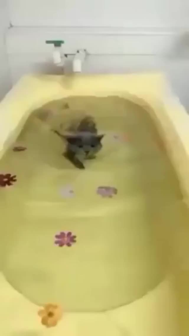 Watch and share Kitty GIFs and Water GIFs by overknown1 on Gfycat