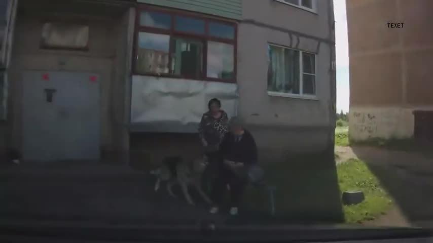 animalsbeingjerks, Russian dog (reddit) GIFs