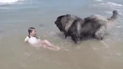 Watch and share That's Enough, Young Hooman. The Water Is Getting A Bit Ruff. GIFs by Sanghan Baek on Gfycat