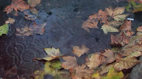 Watch this GIF on Gfycat. Discover more Rain Drops, autumn, autumn gif, boho, fall, fall gif, gif, leaves, orange, photography, rain, rain gif, raining, season, september, yellow GIFs on Gfycat