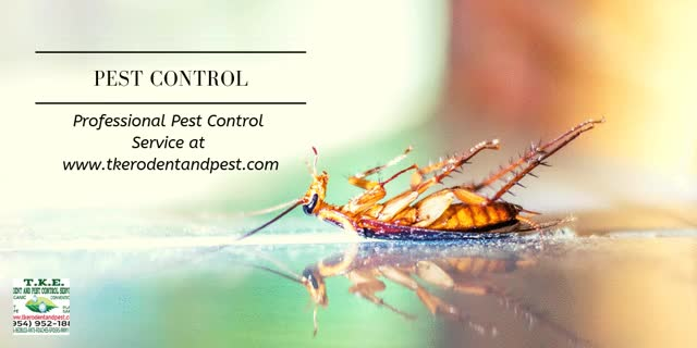 Watch and share Best-Home-Pest-Control GIFs by T.K.E. Rodent and Pest Control on Gfycat