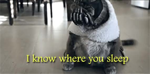 Watch and share Bane Cat GIFs on Gfycat