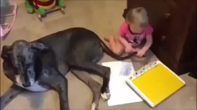 Watch and share Doggy Brush GIFs on Gfycat