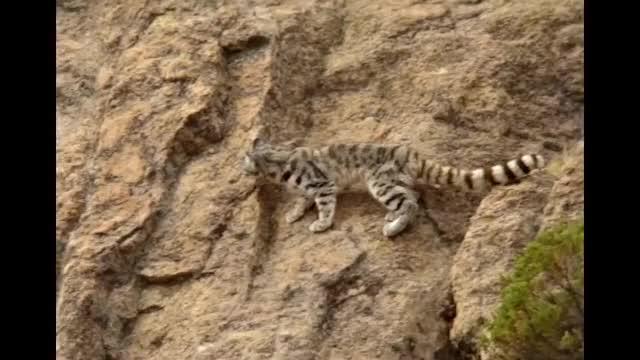 Watch and share Gato Andino GIFs and Fauna GIFs by likkaon on Gfycat