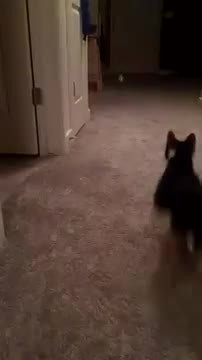 catgifs, my kitty likes to play fetch GIFs
