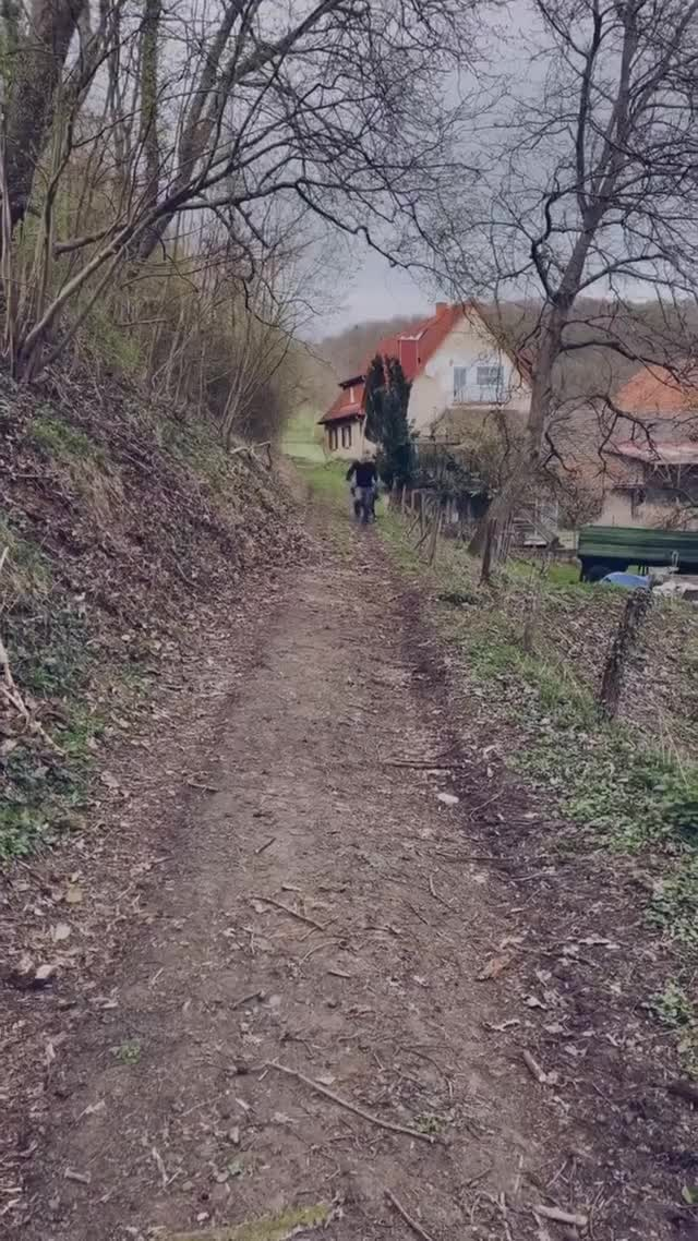 Watch and share Two Pals Frolic Side By Side Down A Trail GIFs by lnfinity on Gfycat