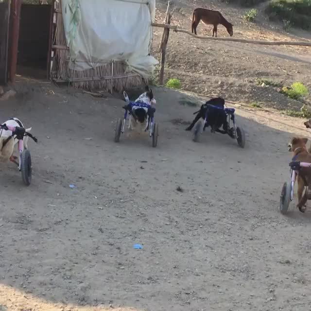 SFT Animal Sanctuary, Tangier, Playtime!!!! GIFs