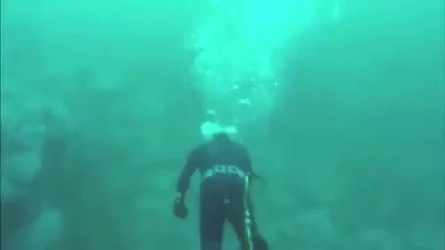 Watch and share Great White Shark GIFs and Scuba Diving GIFs on Gfycat