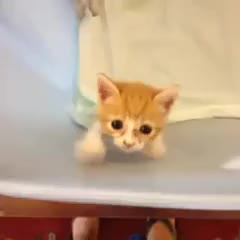 Watch and share Silly Cat Video GIFs and Cats GIFs on Gfycat